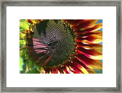 A Sunflower For The Birds Framed Print