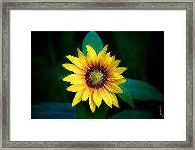 Framed Print featuring the photograph A Sunflower Named Stella by Gwyn Newcombe