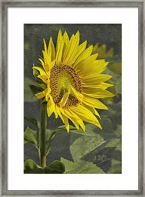 Framed Print featuring the photograph A Sunflower's Prayer by Betty Denise