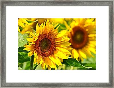 A Sunny Day Framed Print by Mike Martin