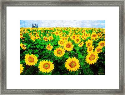 A Sunny Day With Vincent Framed Print