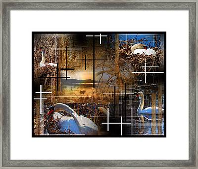 A Swans Mysterious World Framed Print by Andrew Sliwinski