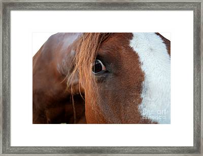 A Sweetheart's Hello Framed Print by Catherine Peterson