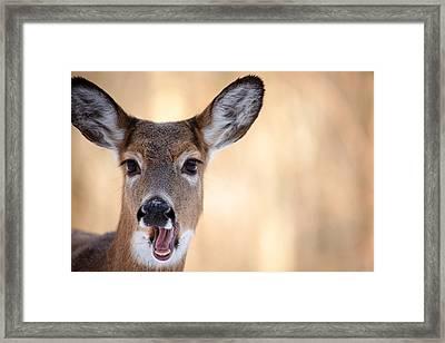 A Talking Deer Framed Print by Karol Livote