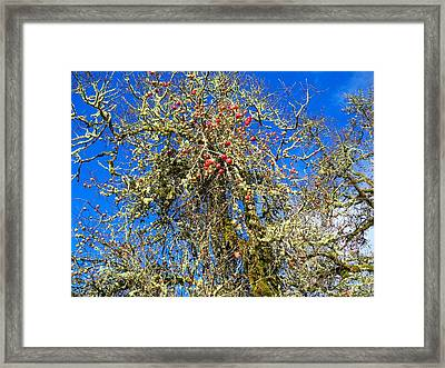 A Tangle Of Apple And Oak Framed Print