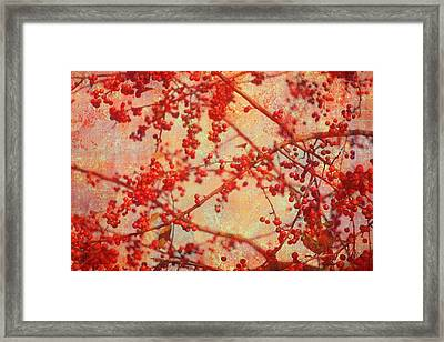 A Tangle Of Fruited Branches Framed Print by Suzanne Powers