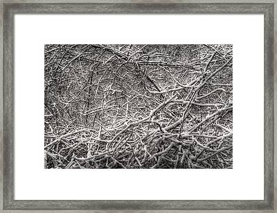 A Tangled Web Framed Print by William Fields