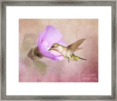 A Taste Of Nectar Framed Print