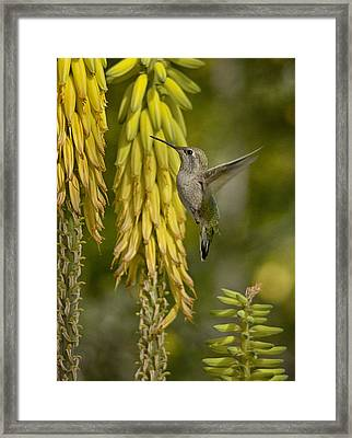 A Taste Of Spring  Framed Print by Saija  Lehtonen