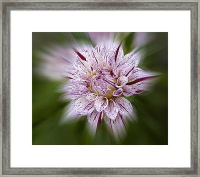 A Taste Of Wine Framed Print