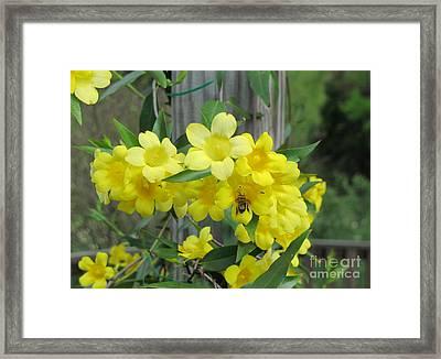 A Taste Of Yellow Framed Print by Arlene Carmel