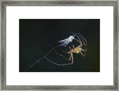A Tasty Treat Framed Print