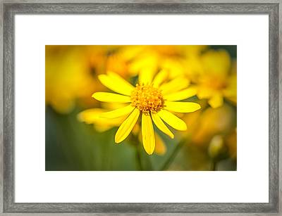 Texas Wildflower 2 Framed Print