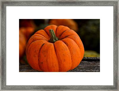 A Thanksgiving Pumpkin Framed Print by Laura DAddona