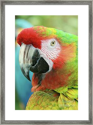 A Thing Of Beauty Is A Joy Forever Framed Print by Sharon Mau