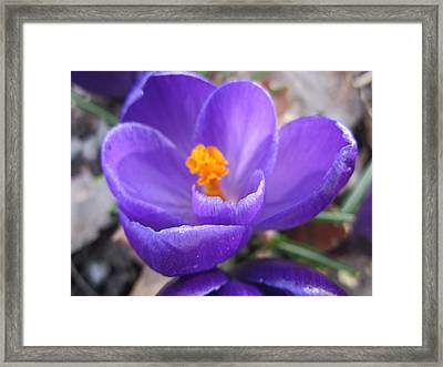 Springjoy Framed Print