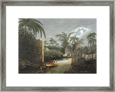 A Tiger Prowling Through A Village Framed Print
