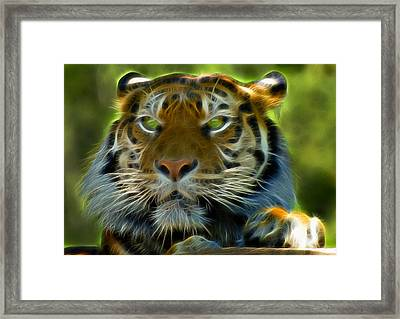 A Tiger's Stare II Framed Print