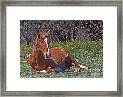 A Time To Rest Framed Print