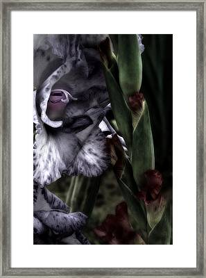 A Touch Of Class No 2 Framed Print by Richard Cummings