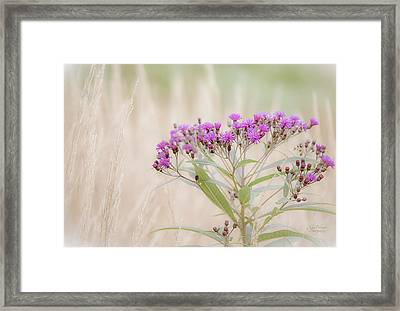 A Touch Of Color Framed Print by Julie Palencia