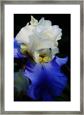 A Touch Of Elegance Framed Print by Bruce Bley
