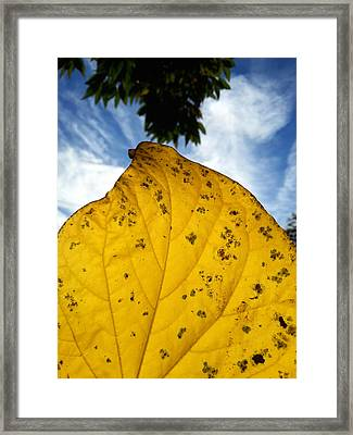 A Touch Of God Framed Print by Lon Casler Bixby