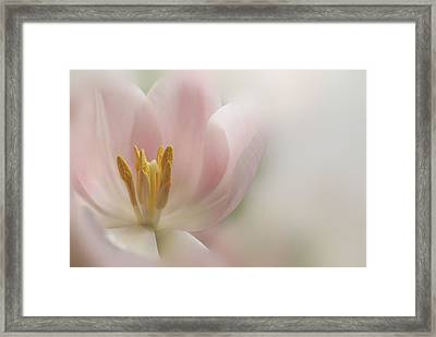 A Touch Of Pink Framed Print by Annie Snel
