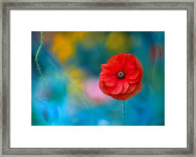 A Touch Of Poppy Magic Framed Print