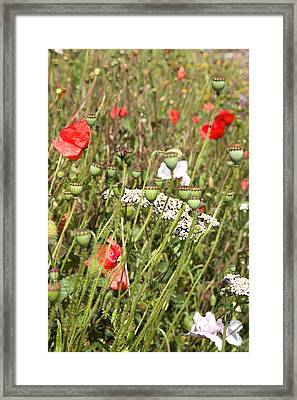 A Touch Of Red. Framed Print by Paul Lilley