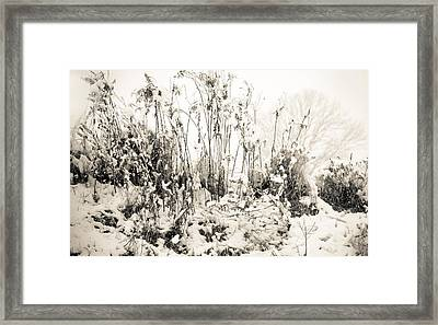A Touch Of Snow Framed Print by Nancy Edwards