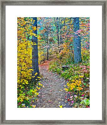 A Trail In West Fork Framed Print by Brian Lambert