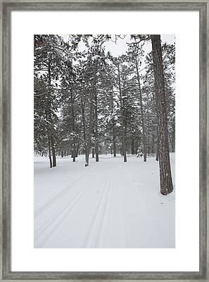 A Trail Through The Forest Framed Print by Tim Grams