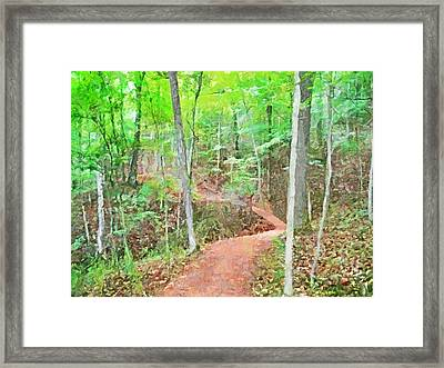 A Trail Through The Woods Framed Print