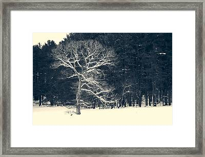 A Tree Before The Trees Framed Print by David Stone