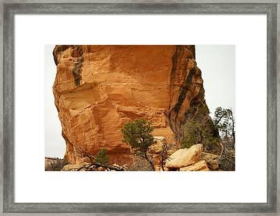 A Tree Below The Bridge Framed Print by Jeff Swan