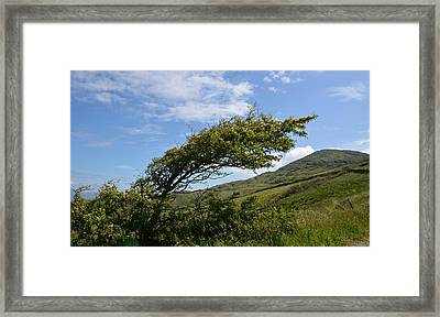 A Tree Bent By The Wind Framed Print