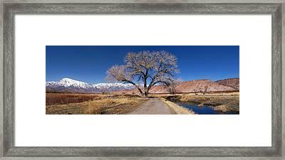 A Tree By The Brook Framed Print by Alexei Biryukoff