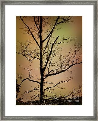A Tree By The Lake Framed Print