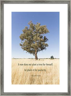 A Tree For Posterity Framed Print by Linda Lees