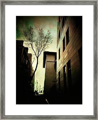 A Tree Grows In Albuquerque Framed Print
