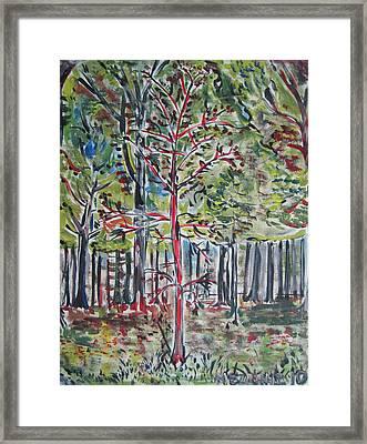 A Tree Grows In Marine Park Framed Print by Jacob Mezrahi