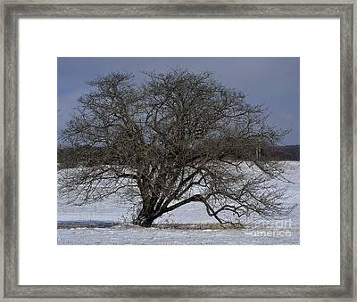 Framed Print featuring the photograph A Tree In Canaan 2 by Randy Bodkins