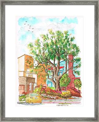A Tree In Horn Drive - Hollywood Hills - Los Angeles - California Framed Print