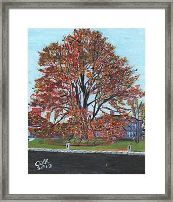 A Tree In Sherborn Framed Print