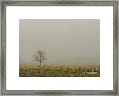 A Tree In Sunrise Fog Framed Print by Cindy Bryant