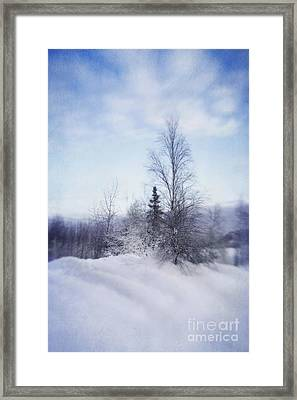 A Tree In The Cold Framed Print