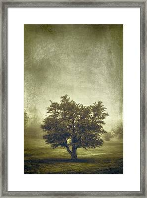 A Tree In The Fog 2 Framed Print by Scott Norris