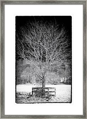 A Tree In The Snow Framed Print by John Rizzuto
