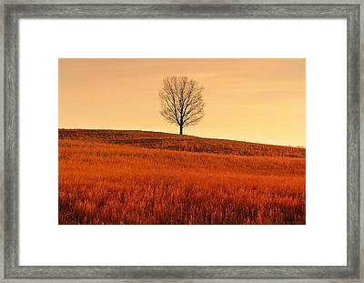 A Tree Is An Object Of Beauty Vii Framed Print